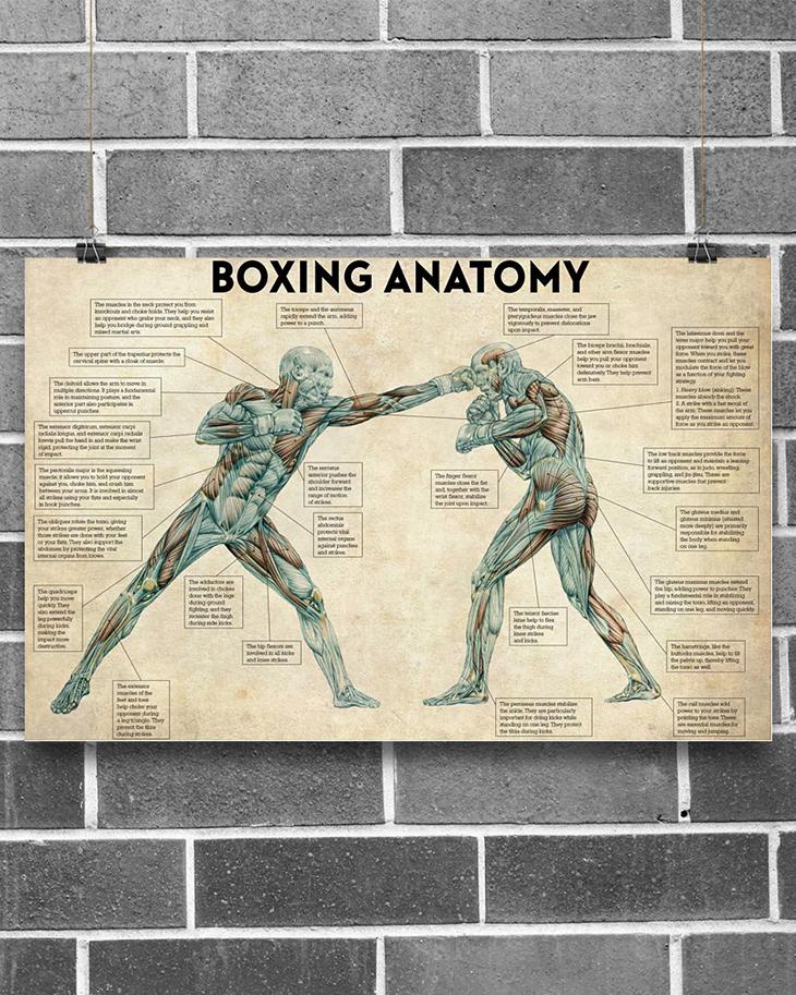 Boxing Anatomy Poster1